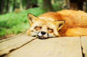 Pourquoi dormir est irréprissible?